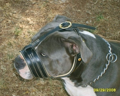 padded leather dog muzzle