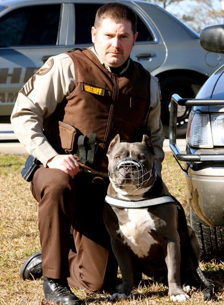 My Bodyguard German Shepherd Dogs Review