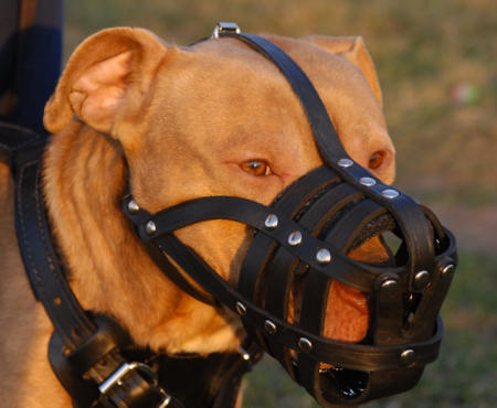 Best Bulldog ventilation dog muzzle