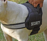 Security Bull dog harness for Vic. Bulldog tracking, patrol work