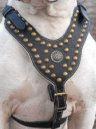 Victorian Bulldog Harnesses for EveryDay